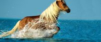 Wonderful horse running in the water - HD animal wallpaper