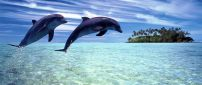 Two joyful dolphins playing in the water - HD wallpaper