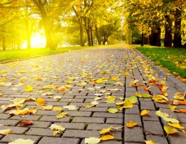 Autumn leaves on the path in the park - HD wallpaper