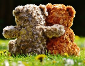 True love between fluffy bears - Romantic wallpaper