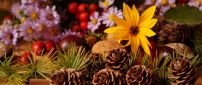 Pinecones and Autumn flowers - HD wallpaper
