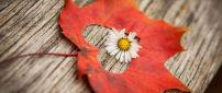 Little white flower in the middle of an Autumn leaf - Heart