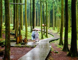 Relaxing walk in the tropical forest - Rainy day