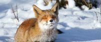 Little red fox stay in the sun - HD winter wallpaper