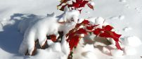 Red Autumn leaf under the cold snow - HD wallpaper