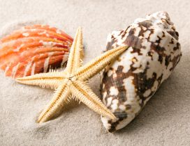 Macro shells and starfish in the sand - HD wallpaper