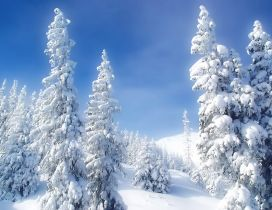 Wonderful white snow over the trees - Winter season