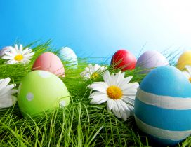 Painted eggs in grass and white flowers - Easter holiday