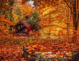 Old rail station and garaj in the forest - Autumn leaves