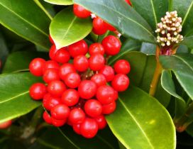Red small Autumn fruits - Vitamins only