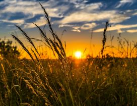 Sunset time over the wheat field - Summer and Autumn seasons