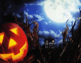 Big moon and scary Halloween pumpkin - HD wallpaper