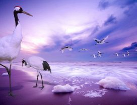 Flock of storks near the ocean - Purple moments