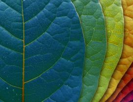 Macro wonderful Autumn leaves - Rainbow colors
