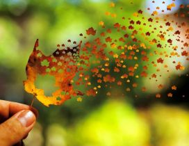 Millions of small Autumn leaves from one big leaf - Magic