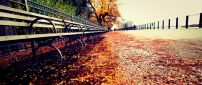 Path full with autumn leaves near the park - HD wallpaper