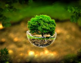 Small tree in a globe glass -Nature lives everywhere is love