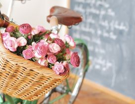 Small red roses in a basket on a bicycle - Spring time