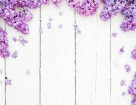 Lilac purple flowers - Photo frame spring season