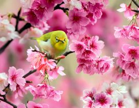 Green little bird sing in a tree - Spring blossom flowers
