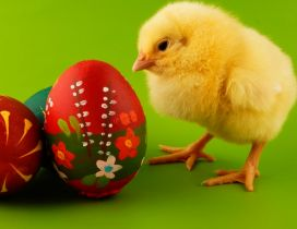 Sweet little fluffy chicken - Painted Easter eggs