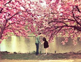 True love under the spring blossom cherry trees - Season
