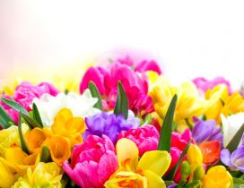 Magic colors in a wonderful bouquet of spring flowers