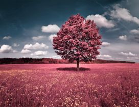 Red nature - Big single tree in a wonderful field