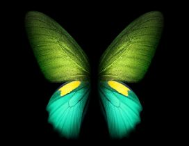 Wonderful fluorescent green butterfly - Smart phone photo