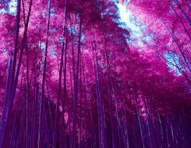 Wonderful pink forest - Nature is beautiful all year