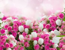 Wonderful photo frame - Pink roses and white tulips