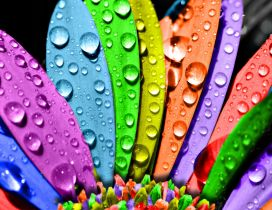 3D big water drops on a colorful flower - HD wallpaper