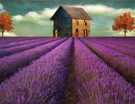 Beautiful painting of Lavender field and house in the back