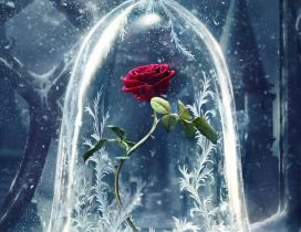 Wonderful red rose in a crystal globe - HD wallpaper