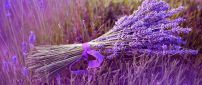 Small bouquet of Lavender flower - Beautiful color perfume