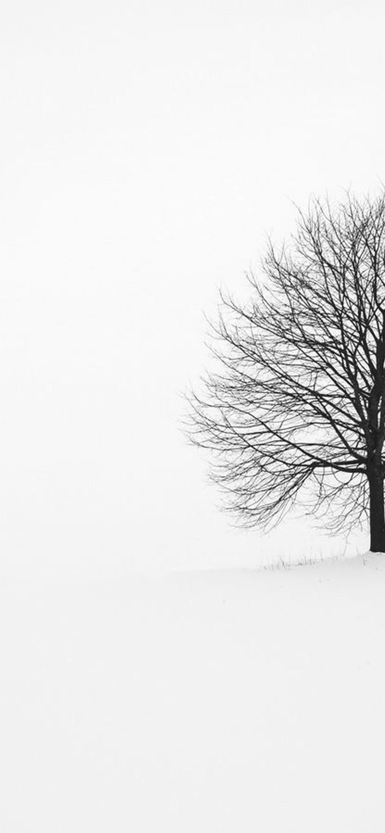 White Nature And One Single Tree Hd Wallpaper